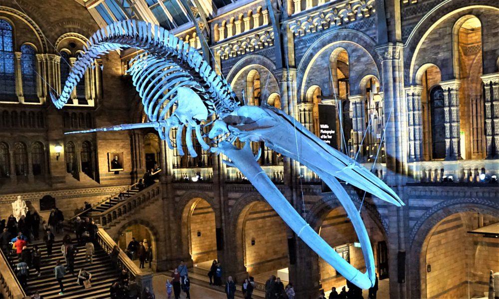 Natural History Museum di Londra