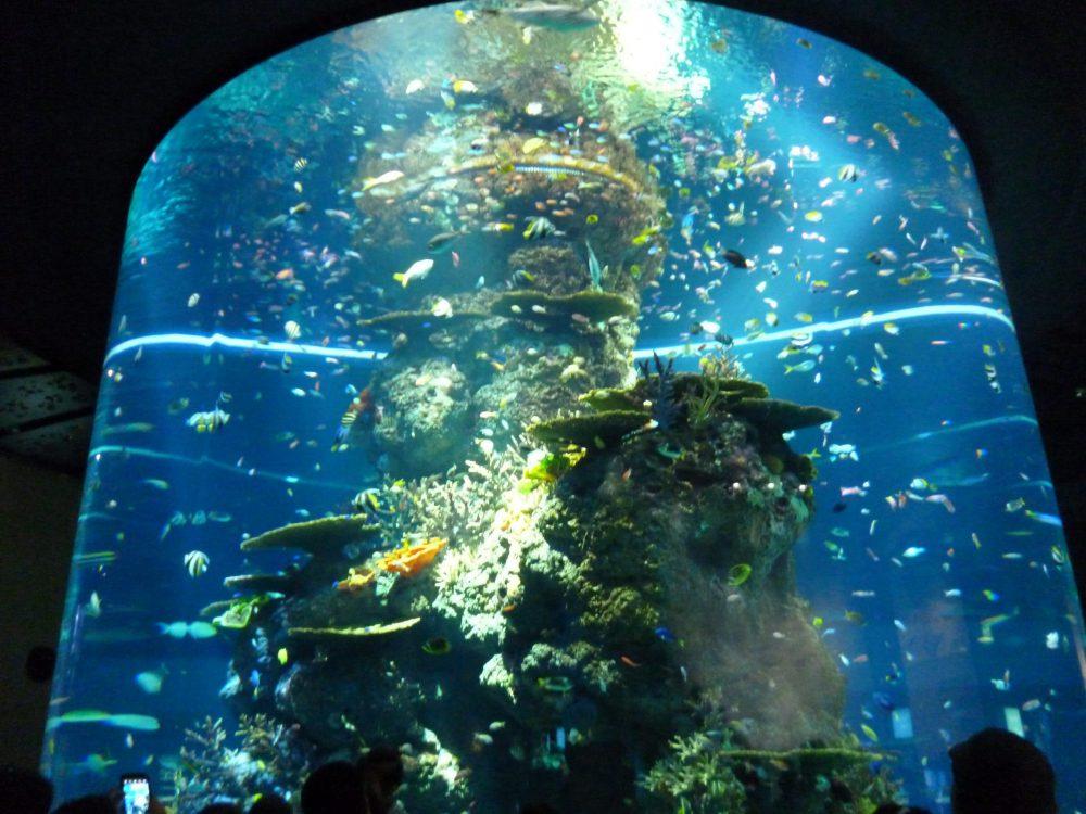 acquario giacarta